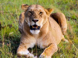 11 Days Beach Holiday and Safari in Kenya and Tanzania