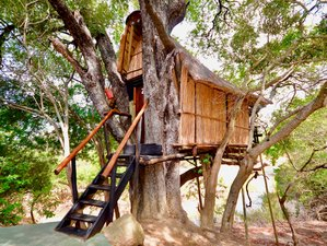 3 Days Treehouse Kruger Park Safari in South Africa