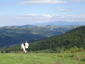 8 Days Center Based Trails Horseriding Holiday in Central Romania