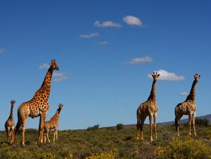 3 Days Big Five Safari in Sanbona Wildlife Reserve, South Africa