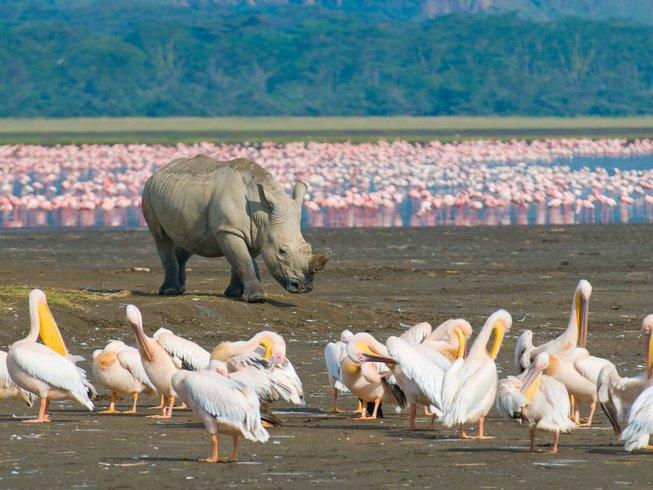 7 Days Budget Masai Mara, Lake Nakuru, and Samburu Safari in Kenya