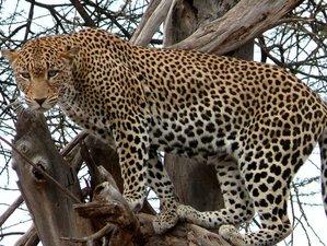 10 Day Tourist Choice Safari in Kenya's Lake Nakuru, Lake Naivasha, and Maasai Mara