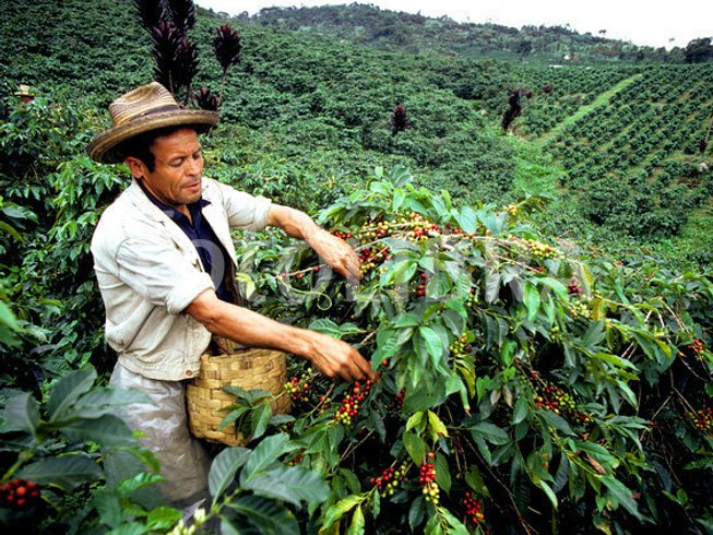 11 Days Colombia Coffee Tour