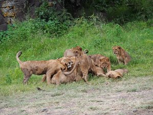 12 Days Great Budget Holiday Best of Kenya and Tanzania Safari