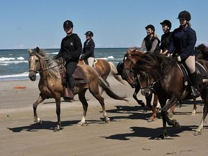 6 Day Exhilarating Horse Riding Holiday in Tversted