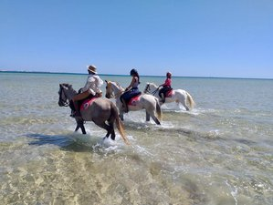 11 Days Sun Festival and Red Sea Horse Riding Adventure in Pharaoh Trails, Egypt