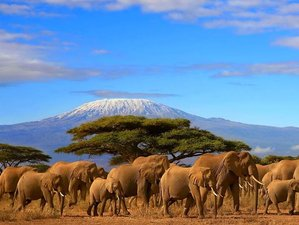 7 Days Classic Safari in Tanzania
