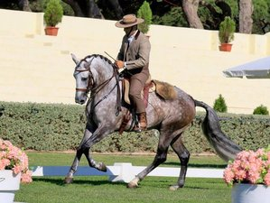 7 Days Five-Lesson Normal Dressage Horse Riding Holiday in Portugal
