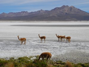 5 Day Sightseeing, Cultural, and Wildlife Tour in Chile
