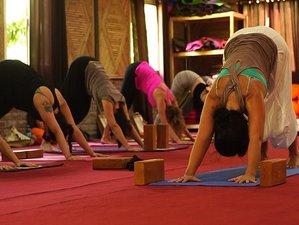 30 Days 300-Hour Yoga Teacher Training Course in Rishikesh, India