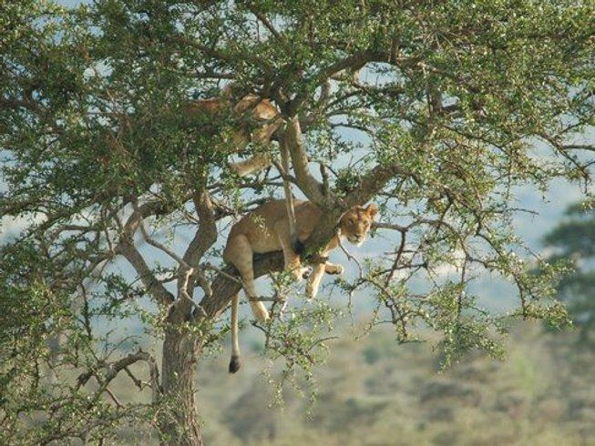 4 Days Classic Tanzania Safari