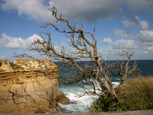3-Daagse Wildlife Tour via Great Ocean Road en Grampians National Park in Victoria, Australië