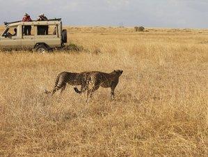3 Days Highlight Safari in Maasai Mara National Park, Kenya