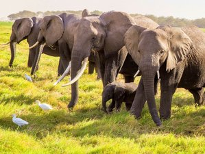 4 Days Classic Tanzanian Safari