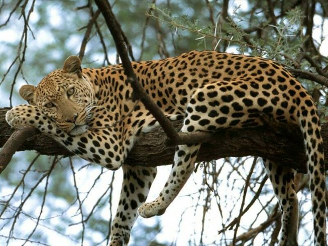 5 Days Wildlife Tanzania Safari