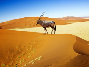 4 Days Sossusvlei and Swakopmund Sightseeing and Wildlife Safari in Namibia