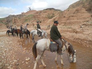 8 Day Argan Horse Riding Holiday in Essaouira