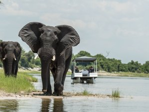 4 Day Safari in Chobe National Park