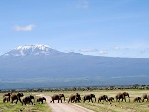 3 Days Affordable Private Safari in Kenya