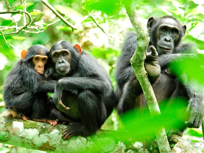 12 Days Gorilla Trekking and Adventure Safari in Uganda