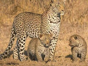3 Days Guided Safari in Kruger National Park, South Africa