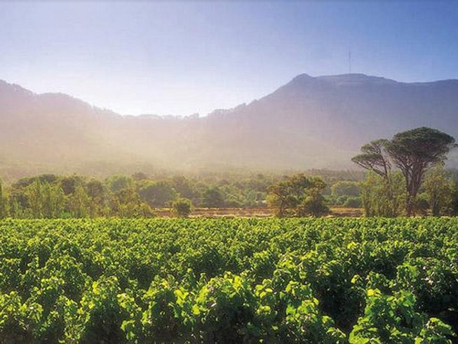 3 Days Steenberg Golf & Wine Tasting Trip in Cape Town
