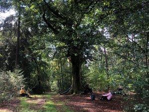 3-Daagse Stilte Retreat in de Natuur in Renkum, Gelderland