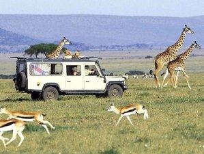 4 Days Mid range lodge  Safari in Maasai Mara and Lake Nakuru