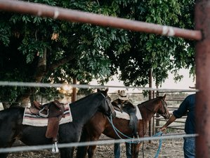 4 Day Authentic Cattle Station and Horse Riding Experience near Timber Creek, NT, Australia
