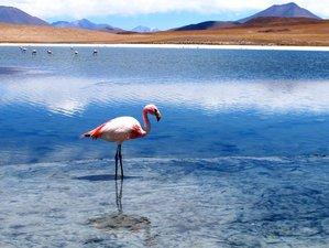 5 Day Regular Adventure Wildlife Tour from La Paz to Uyuni, Bolivia
