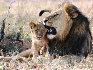 6 Days Volunteer and Safari in Kruger National Park, South Africa