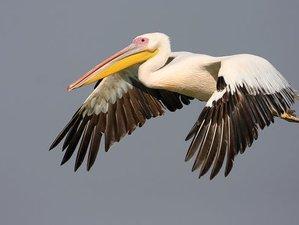 10 Days Danube Delta Birdwatching Tour in Transylvania, Romania