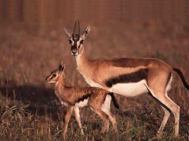 5 Days Private Safari in Kenya