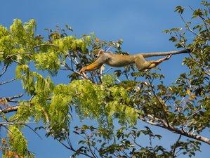 7 Day Breathtaking Wildlife Tour in Xixuau Reserve, Brazil