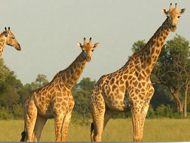 4 Days Lake Nakuru and Maasai Mara Safari in Rift Valley Province, Kenya