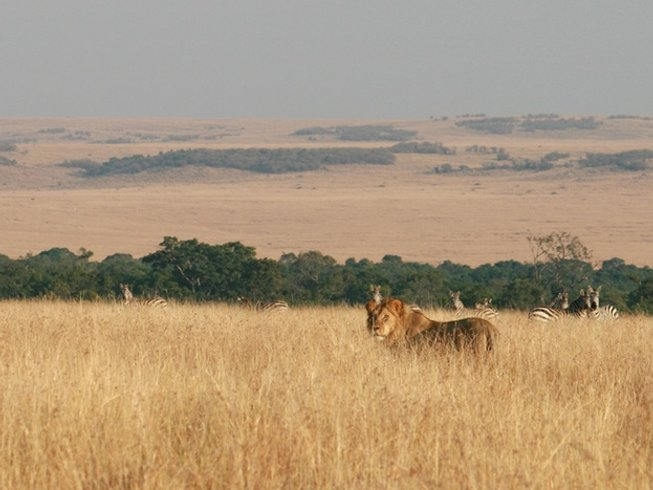 2 Days Maasai Mara Safari in Narok County, Kenya
