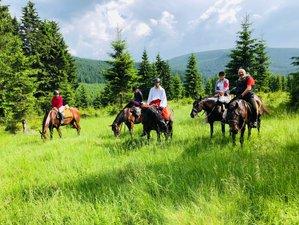 8 Days Point to Point Wonderful Transylvanian Horse Riding Adventure in Romania