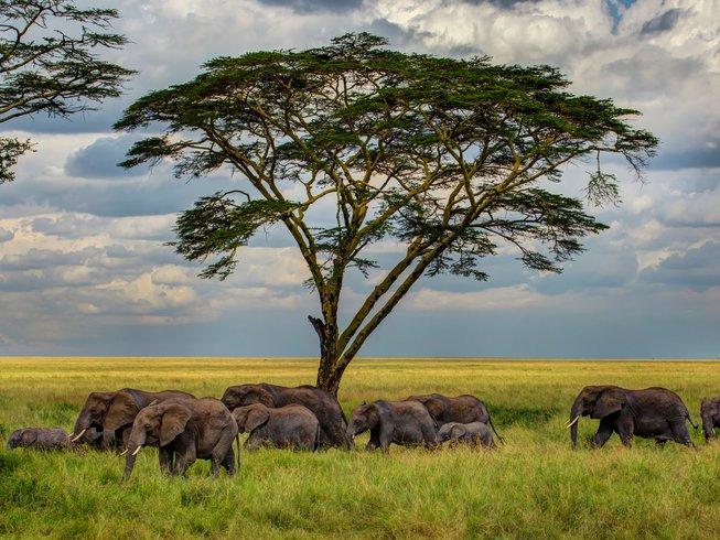 4 Days Lake Manyara, Serengeti, and Ngorongoro Private Safari in Tanzania