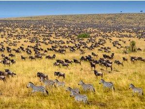 4 Days Best Value Combo Masai Mara and Lake Nakuru Safari in Kenya