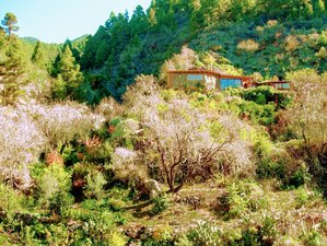 8 Day Private Intensive Fruit Fasting Detox Retreat for 1 or 2 Guests on La Palma, Canary Islands