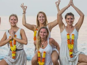15 Day 100-Hour Adjustments Immersion Yoga Teacher Training in Goa