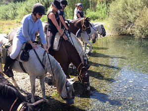 8 Day Tapas Trail Horse Riding Holiday in Fuengirola, Malaga, Costa del Sol