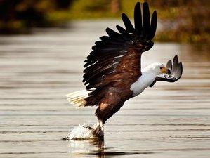 2 Days Great Migration and Budget Safari in Mount Suswa and Lake Naivasha, Kenya