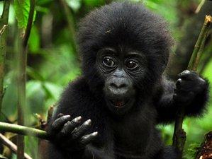 7 Days Primate and Wildlife Safari in Bwindi, Queen Elizabeth, and Kibale, Uganda