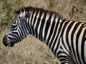 10 días de fascinante safari de Arusha a lago Natrón en Tanzania