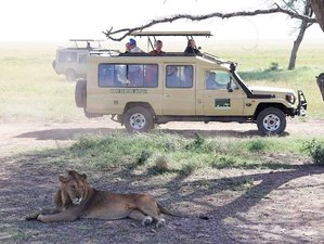 4 Days Sense of Tarangire, Manyara, & Ngorongoro Crater - Camping