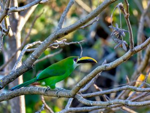 11 Days Culture and Nature Birding Tour in Guatemala