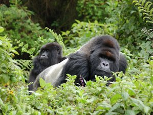 3 Days Gorilla Trekking Safari in Bwindi Impenetrable National Park, Uganda