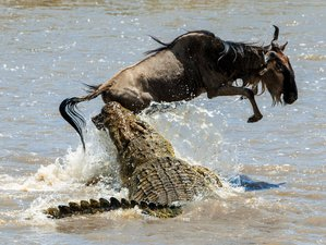 10 Days Great Migration Adventure in Tanzania