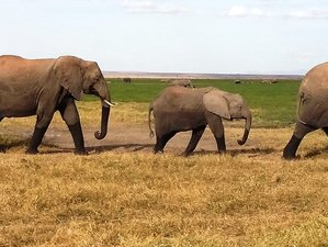 8 Days Lake Manyara, Tarangire, Ngorongoro and Serengeti Lodge Safaris